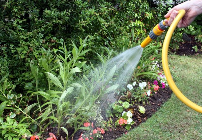 Ghidul cultivarii plantelor in conditii dificile, in trei pasi