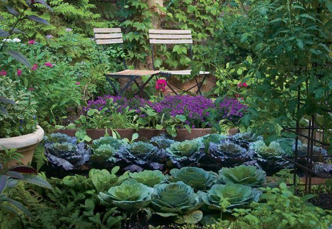 Cine a zis ca o gradina de legume nu poate fi frumoasa?