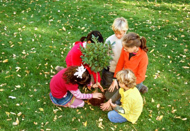 Toamna, sezonul ideal pentru plantarea pomilor fructiferi. Invata cum sa plantezi corect!