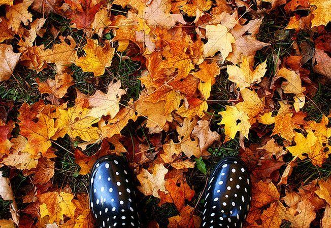 Ce poti face cu frunzele uscate