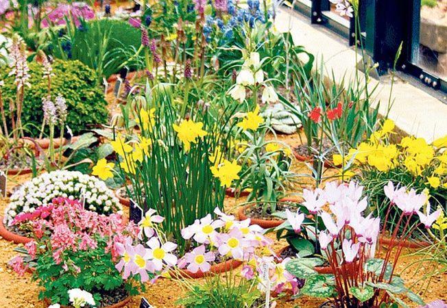 Gradina-bijuterie sau cum sa cresti flori in miniatura