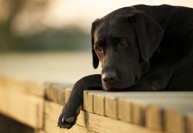 Inedit. Si cainii pot fi optimisti sau pesimisti