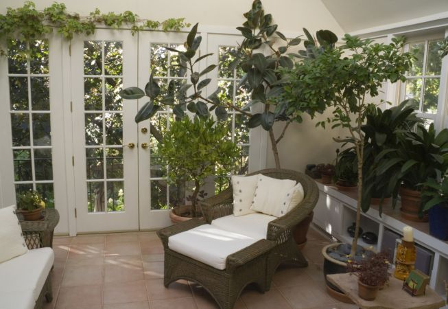 5 plante cu efect anticancerigen pe care trebuie sa le ai in casa