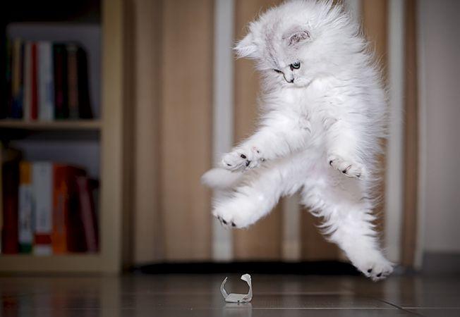 pisica ninja 2