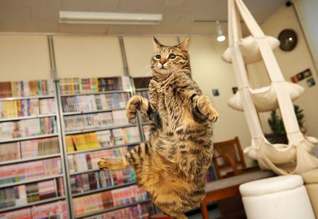 pisica ninja 6