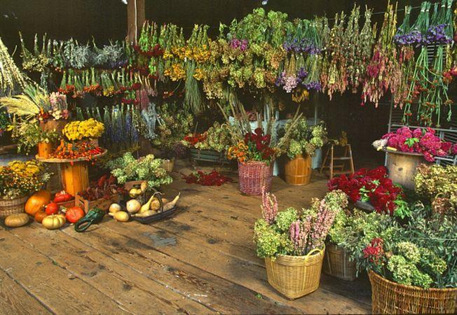 5 plante aromate care-s mai bune uscate