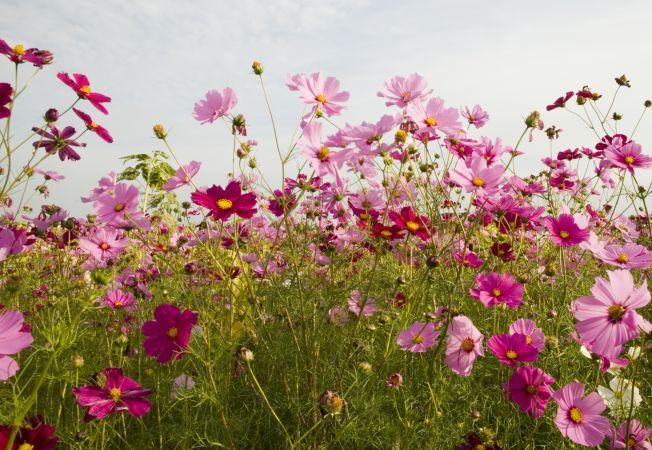 Top 5 flori inalte cu un impact vizual puternic