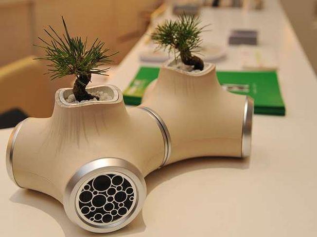 6 moduri artistice de a-ti decora locuinta cu plante