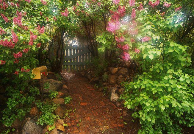Gradini secrete in jurul casei tale. Iata cum poti crea un loc intim in gradina ta!
