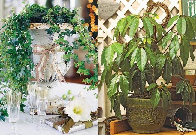 Gradinareste in casa top 5 cel mai usor de intretinut for Plante de interior