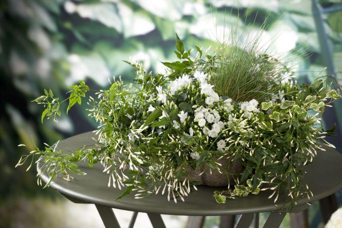 5 flori care iti vor umple casa de culoare in aceasta iarna