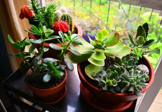 Alege-ti plantele de interior in functie de lumina