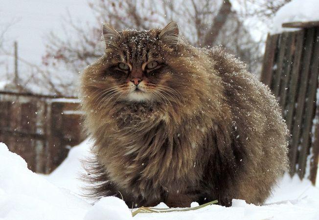 pisica 0