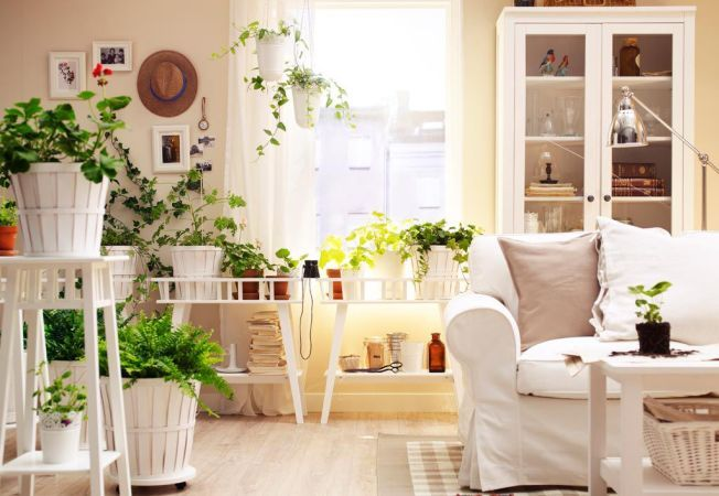 Top 5 plante aromatice care dau parfum si culoare interiorului