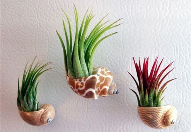 Plante aeriene pentru casa ta. Iata cum trebuie ingrijite!