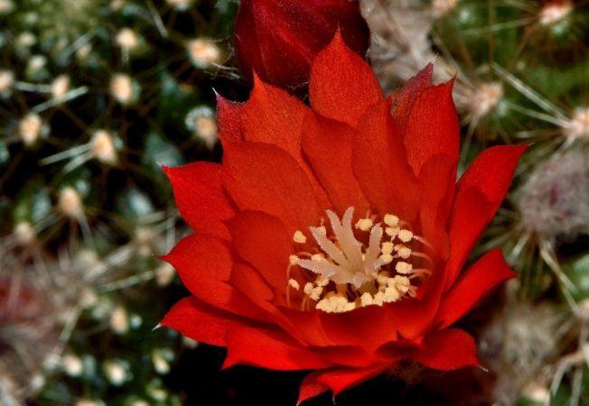 5 flori de cactus care iti pot transforma casa intr-un adevarat paradis