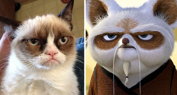 asemanari pisici 1