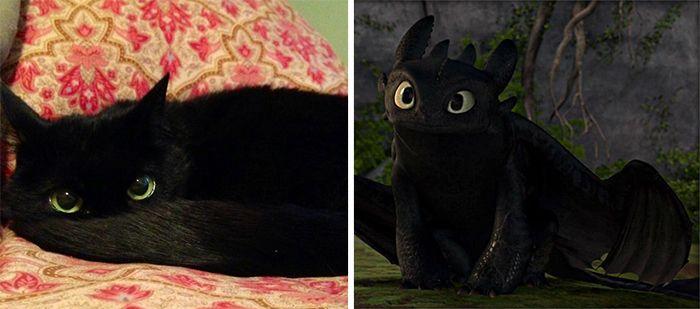 asemanari pisici 2
