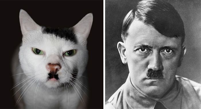 asemanari pisici 5