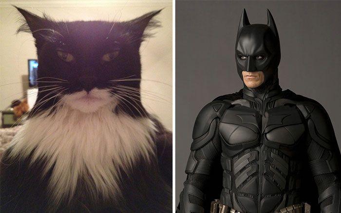 0 asemanari pisici 0