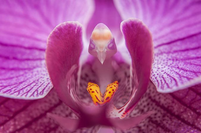 4 orhidee spectaculoase care iti starnesc imaginatia. Iata cum arata acestea!