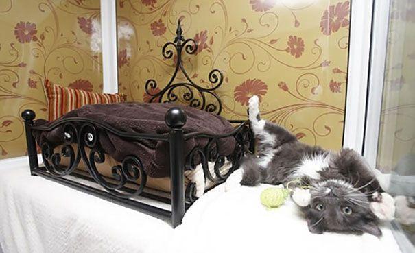 pisici 3