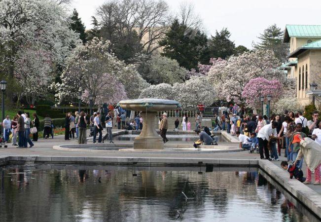 Gradina Botanica Brooklyn: un miraj verde in inima New Yorkului