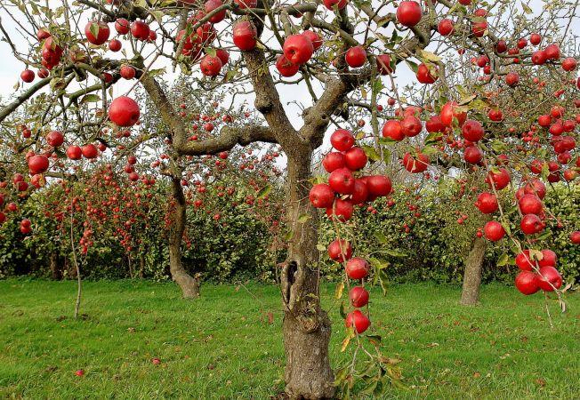 5 trucuri pentru o livada productiva. Afla cum sa alegi cei mai buni pomi fructiferi!