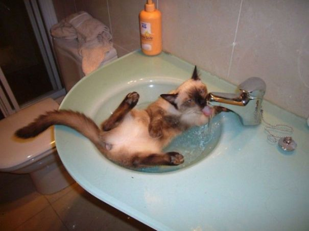 pisici apa 1