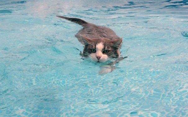 pisici apa 2