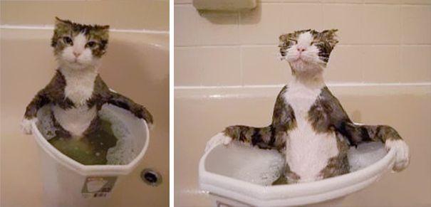 pisici apa 5