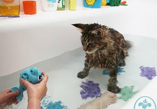 pisici apa