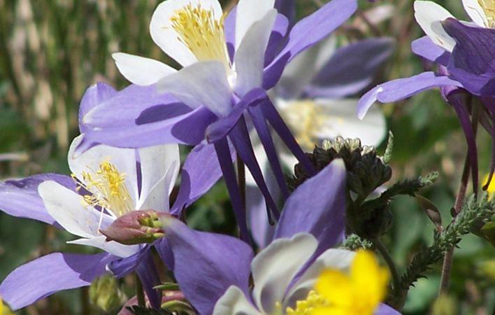 5 plante decorative care sunt perfecte pentru un gradinar Plante decorative