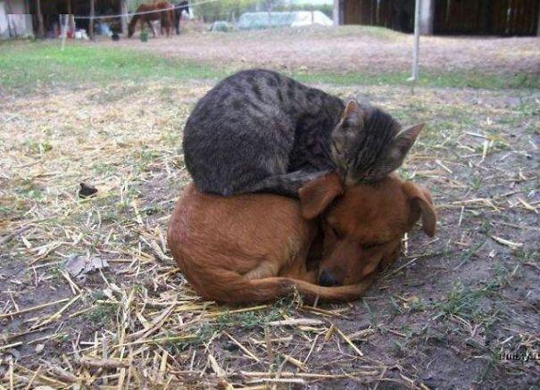 caini pisici 1