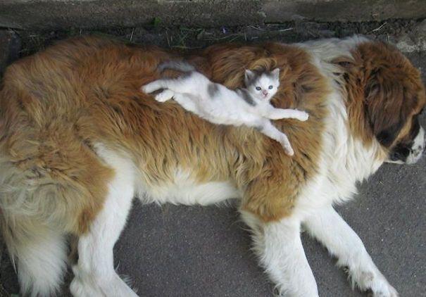 caini pisici 2