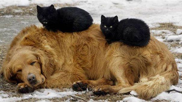 caini pisici 3
