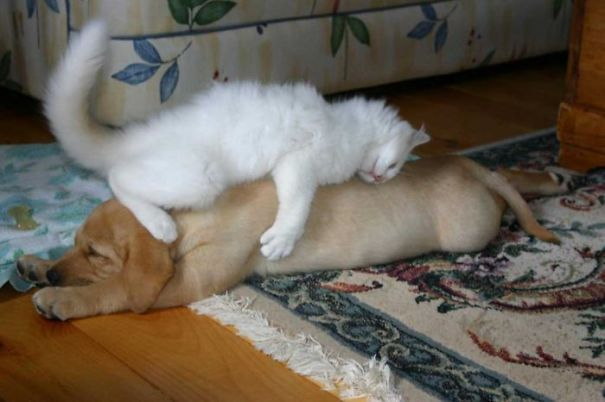 caini pisici 5