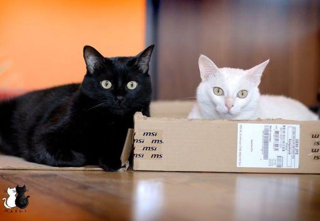 pisici 4