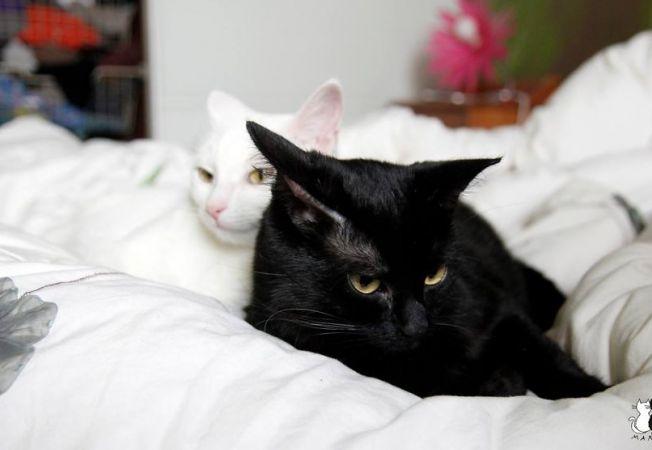 pisici 5