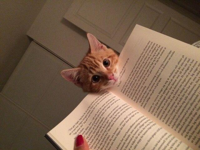 caini pisici citit 3