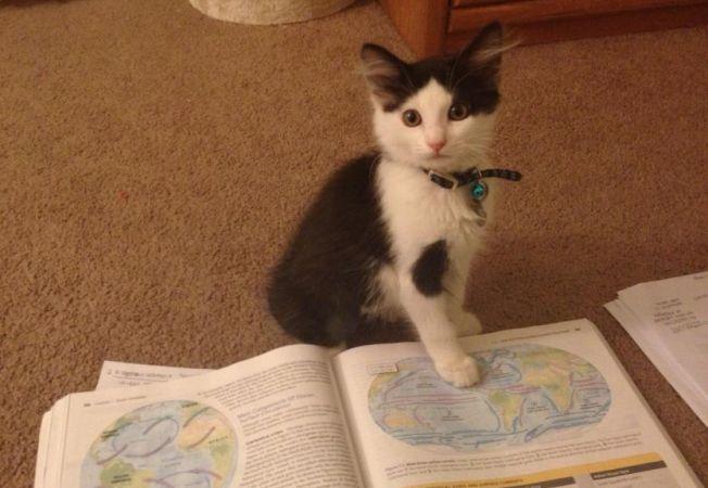 caini pisici citit 4