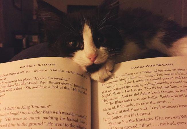 caini pisici citit 6