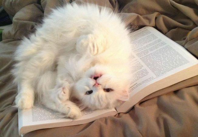 caini pisici citit