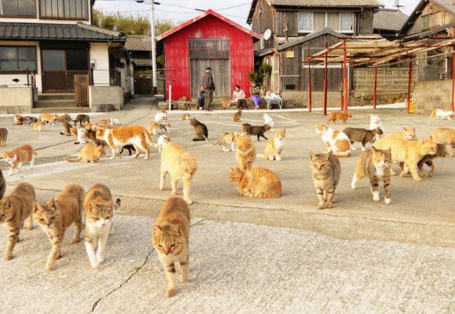 insula pisicilor 1