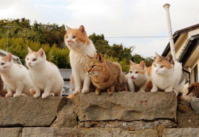 insula pisicilor 2