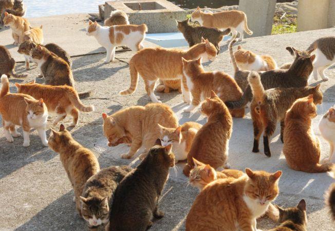 insula pisicilor 3