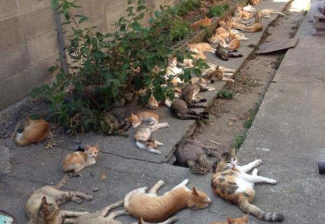 insula pisicilor 4