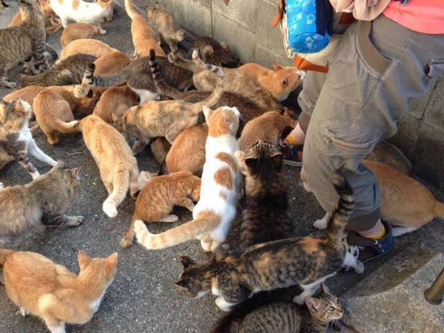 insula pisicilor 5