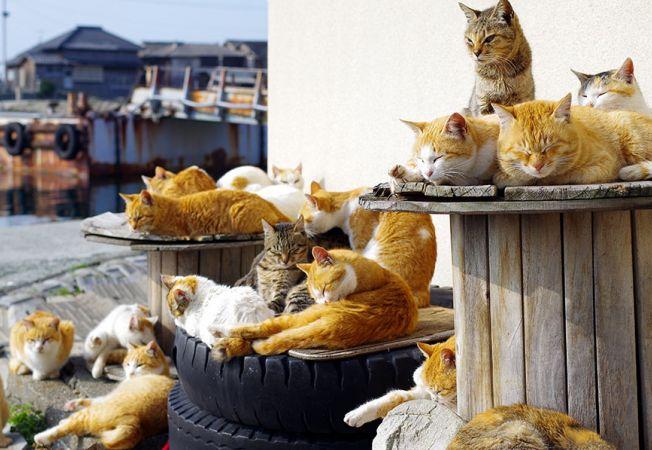 insula pisicilor 7