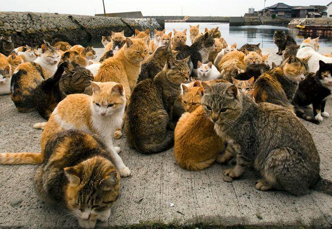 insula pisicilor 9